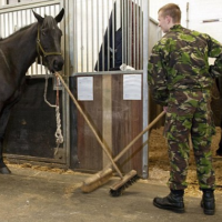 Funny Video: Brit war horse mucks out his own stable