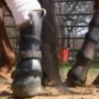 Video: Ranch Hand Rescue & Prostheticare Fort Worth team up to give horses new legs