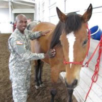 Real war horses – vet therapeutic riding program