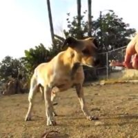 Video: Abused street dog Ralph's rescue and rehab