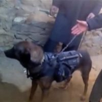 Taliban claims US dog of war captured